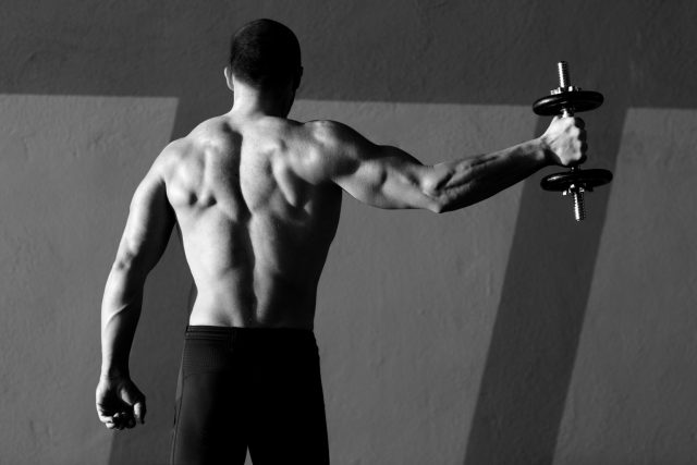 back muscles 2